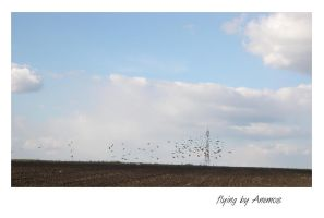 Flying by Anemos-Photography