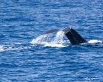 Another Whales Tail by bjhale