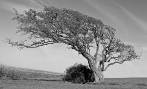 Tree on the Hill by Xs9nake