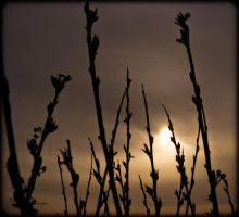 Dark Sunset Through Weeds by tjsviews