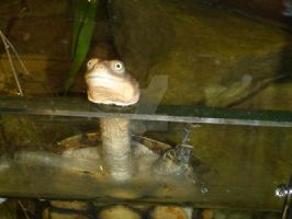 Long Necked Turtle by Mana-L