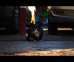 Urban Cats - 32 by MARX77