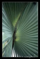 Tropical Tree. by sandyprints