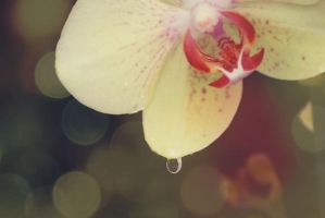 orchid 5 by pellegrina