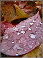 Nature's tear drops by irish-eyes2