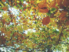 Autumn leaves by josephinebruce
