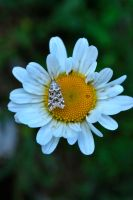 Insect on flower by Cicciobello-BoBo