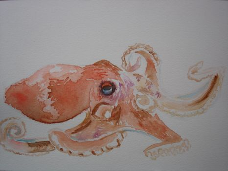 octopus by shajanxt