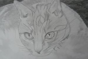 Cat by realtimeartist