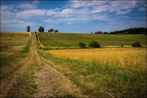 Summer in the country by LiveInPix