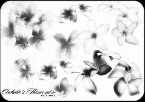 Orchidee's Flower set 01 by orchidee