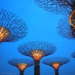 Gardens by the Bay by yingyng