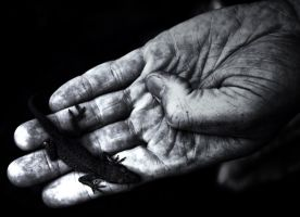 Lizard in Hand by ScottJWyatt