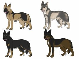 German Shepherd Imports CLOSED by 4dogowner