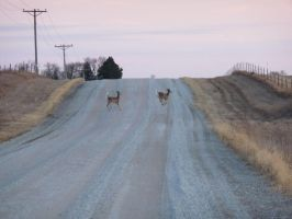 Deer Crossing by captpackrat