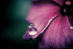 .: Drop :. by Duffbh