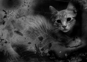 Cat Manip by PoisonGirl-sts