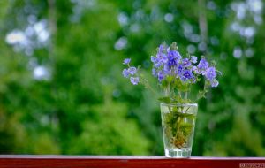 flower-vodka glass by plastic11