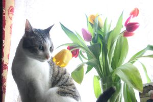 alfie with flowers II by thom-cat