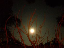 A Full Moon In The Red Tree-01 by hummingbird88