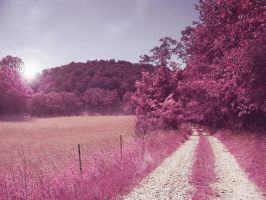 Pink Roads - Stock by Thy-Darkest-Hour