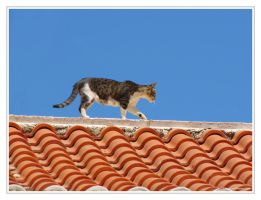 Cat on a hot roof by Pajunen