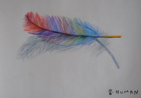 Feather Color Study by TalesOfNightWing
