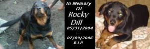 In Memory Of Rocky Dill by BlissfullyRebellious