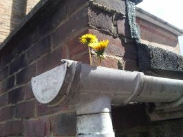 Gutters need cleaning then... by DanBoldy