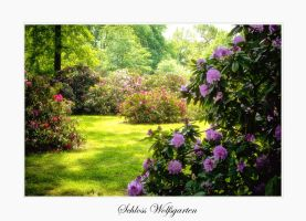 Schloss Wolfsgarten III by calimer00