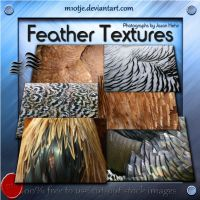 High Reslolution Feather Textures by M10tje