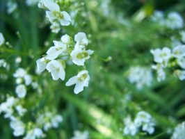 Blur of flowers by evanna11