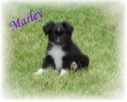 Marley's Baby Picture by Berrymarley