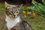 just a cat X by Wilithin