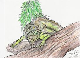 Spike the Iguana... RIP by dizturbed