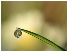Goutte de vie - Drop of life by devknu