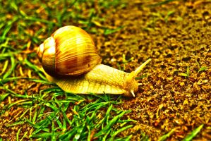 Snail HDR 1 by SomeoneNamedTom