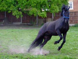 Matador Sideways Sprint by the-other1