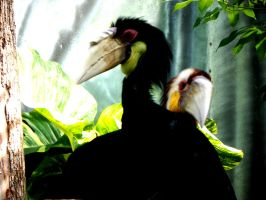 Hornbill Birds by ElenaSaleeby