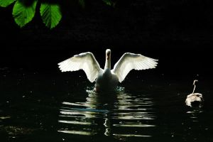 Angel of the Moat... by EarthHart