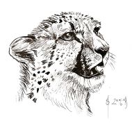 Cheetah - ink, 1 by snow-jemima
