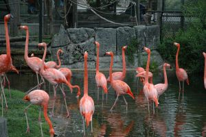 Stock - Flamingos by Cleonor
