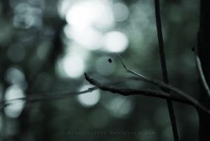 In The Woods  3 by Schnitzelyne