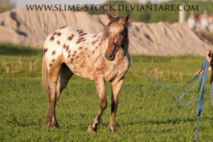 TB x Appy head turn on lead line by slime-stock