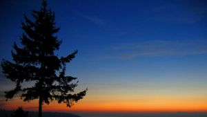 Fir Tree Sunset by dsiegel