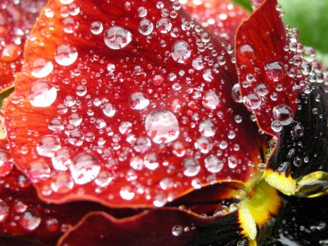 dew drops by increase-peace