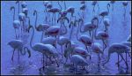 Flamingoes in Blue by kanes
