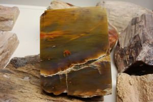 Petrified Wood Stock 71 by flufdrax
