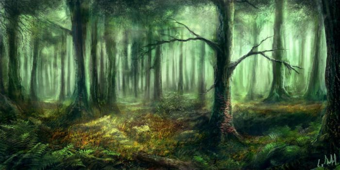 Forest by rambled