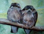 Frogmouths by WendyMitchell